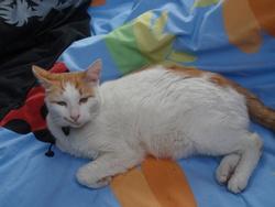 Spirit, chat Gouttière