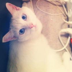Spiroux, chat