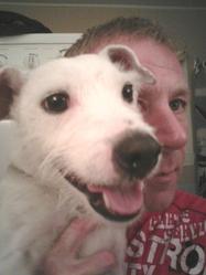 Spot, chien Parson Russell Terrier