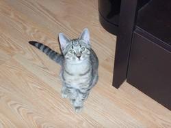 Spring, chat Gouttière