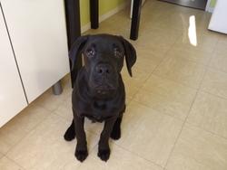Spyke, chien