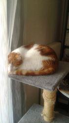 Stanislas, chat