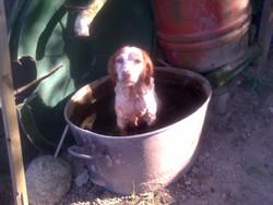 Stella, chien