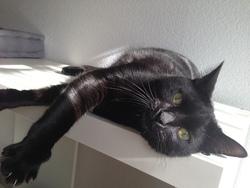 Stitch, chat Gouttière