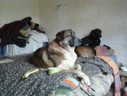 Stuart, chien