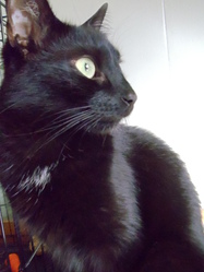 Succube, chat Gouttière