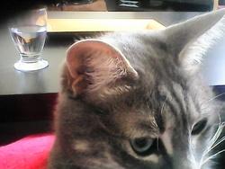 Sucré, chat