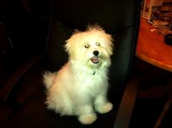 Suky, chien