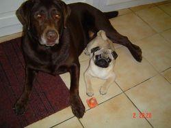 Sultane Et Dixie, chien