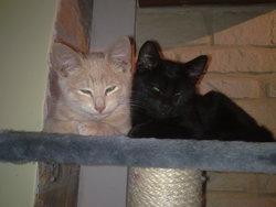 Sun Et Moon, chat