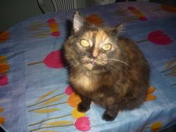 Sunday, chat Gouttière