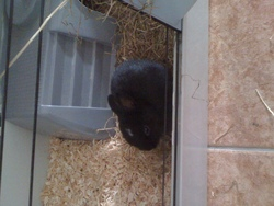 Sunny, rongeur Lapin