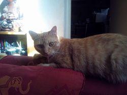 Sunny, chat Gouttière