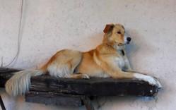 Sunshine, chien Border Collie