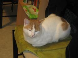 Sushi, chat Gouttière