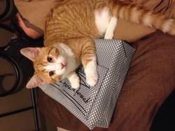 Swagy, chat Gouttière