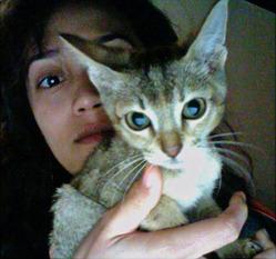 Sweetiki, chat Gouttière