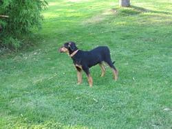 Swetty, chien
