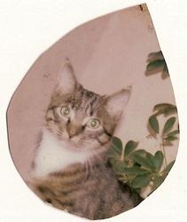 Sydney, chat Gouttière