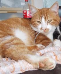 Sylver, chat Gouttière