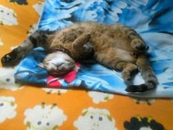 Symba Et Tania, chat Gouttière