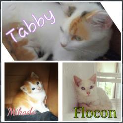 Tabby, Flocon Et Mikado, chat