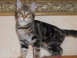 Tala, chat Gouttière