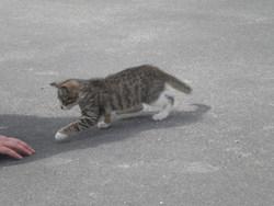 Tali, chat Gouttière