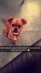 Talya, chien