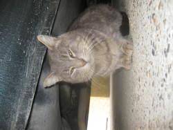Tamago, chat Gouttière