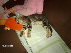 Tango, chat Gouttière