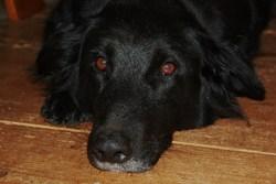 Tania, chien