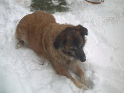 Tania, chien Border Collie