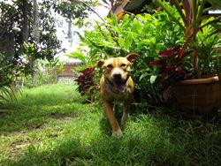 Tano, chien