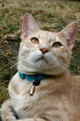 Tao, chat Gouttière