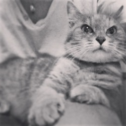 Tara, chat Gouttière