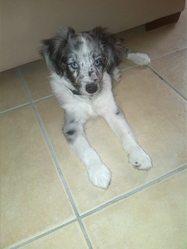 Tara , chien