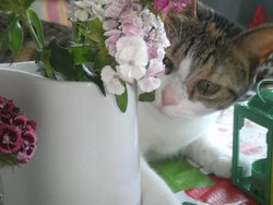 Tartine, chat Gouttière