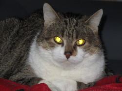 Taze , chat Gouttière