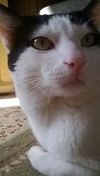 Tchitcho, chat Gouttière