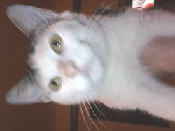 Tchobiloute, chat Gouttière