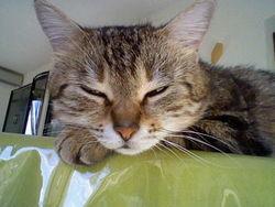 Tchoupi, chat Gouttière