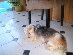 Tchoumi, chien