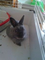 Teddy, rongeur Lapin