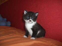 Teddy, chat Gouttière