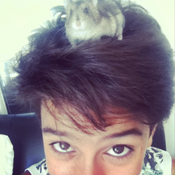 Teddy, rongeur Hamster