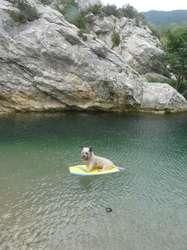 Teejee, chien Skye Terrier