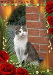 Teki, chat Gouttière