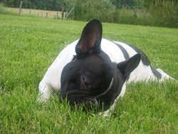 Tekila , chien