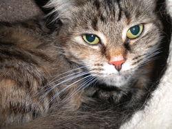 Temari, chat Gouttière